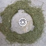 Protected drain